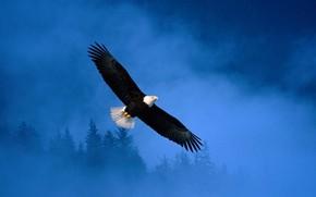 полёт, орёл, свобода