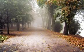 autumn, Park, leaves, fog