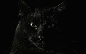 animals, black, fear, Koshak