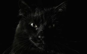 zwierzta, czarny, strach, Koshak
