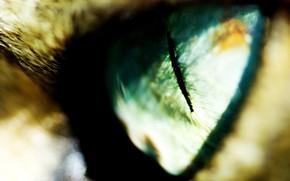 глаз, зрачок, размытость