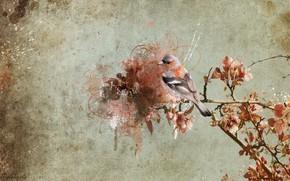 uccello, ramo, sfondo