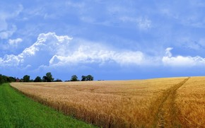 campo, carretera, hierba