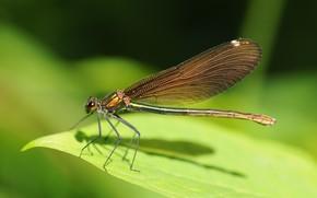 Insectes, libellule, vert, liste