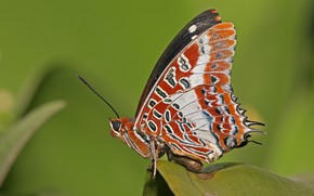 mariposa, alas, lista