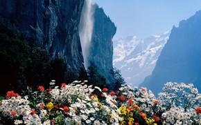Schweiz, Wasserfall, Blumen