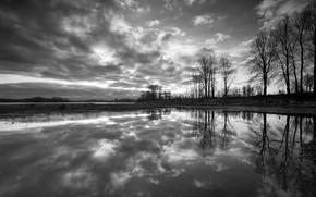 noir et blanc, arbres, rflexion, eau