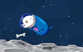 вектор, собака, космос