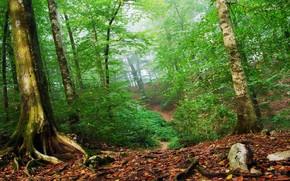 лес, зеленый, листья