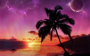 пальма, планеты, закат
