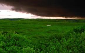 зеленый, трава, облака, буря, поле
