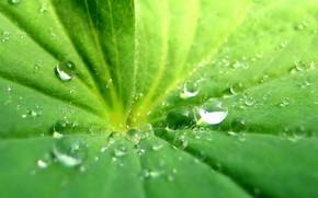 капли, лист, зелень
