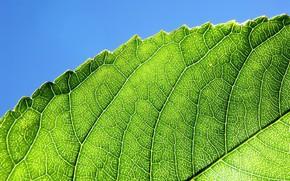 лист, зелень, линии