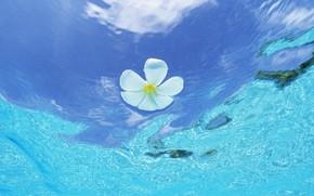 Maldive, fiore, acqua