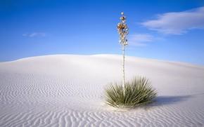 куст, пустыня, песок