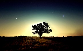 tree, morning, Stars