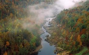 foresta, alberi, fiume, nebbia, nuvole