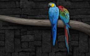 попугай, ветка, стена, рисунок