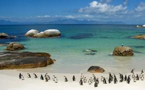 пингвины, берег, камни, вода