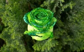 lgumes verts, rose, clinquant