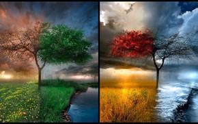 rvore, natureza, lugar, beleza natural, pocas do ano