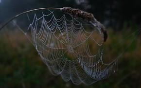 web, gotas