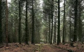 森林, 树