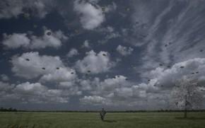 anular, Nublado, solido, estepe, tristeza, vo, liberdade, inscries