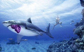 акула, трусы, парень, креатив, юмор