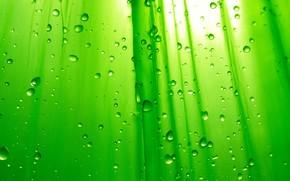 Green, drops, von