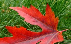 automne, Nature, rouge