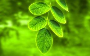 garden, leaves, greens