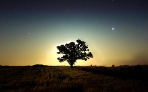 tree, night, Star, dark