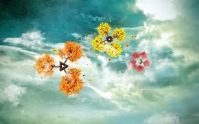 kaprys, kwiaty, niebo, chmury