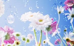 Flores, gotas, cu