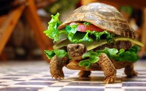 vegetables, food, hamburger