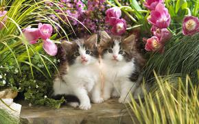 кошки, цветы, котята