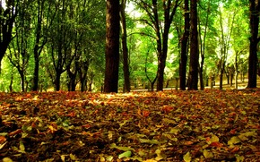 otoo, deja, Los rboles, bosque