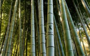 gaia, бамбук, природа, лес