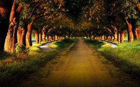 strada, alberi