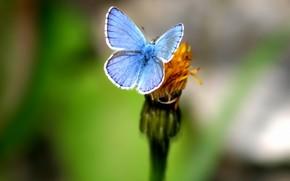 farfalla, verdura, fiore