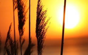 закат, трава, солнце