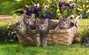 animals, Kittens, basket