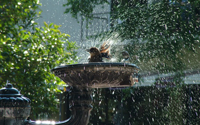 birdie, fountain, spray, drops