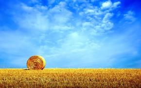 campo, cielo, pagliaio