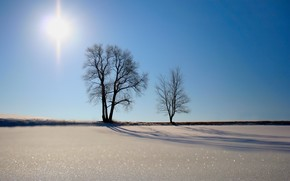 деревья, песок, солнце