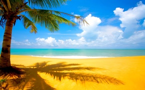 palm, sea, beach, sand, clouds, tropics