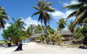 tropics, Palms, beach