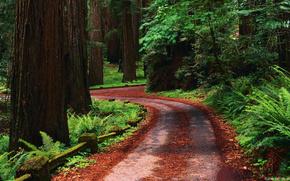 bosque, carretera, Los rboles