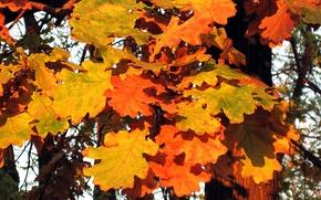 autunno, fogliame